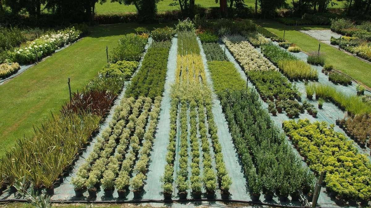 P pini re pour achat de plantes a feuilles ou a fleur for Achat de plantes sur internet